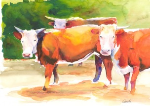 bennet-red3cow-2ver portfolio