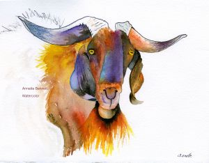 bennett goat  more abstract portfolio name