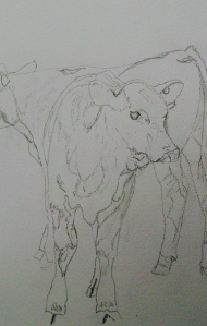 Drawing of Angus calves