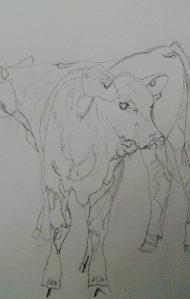 Drawing of Angus calves