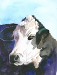 watercolor, angus, hereford,, painting, protrait, cow, cattle, annette bennett