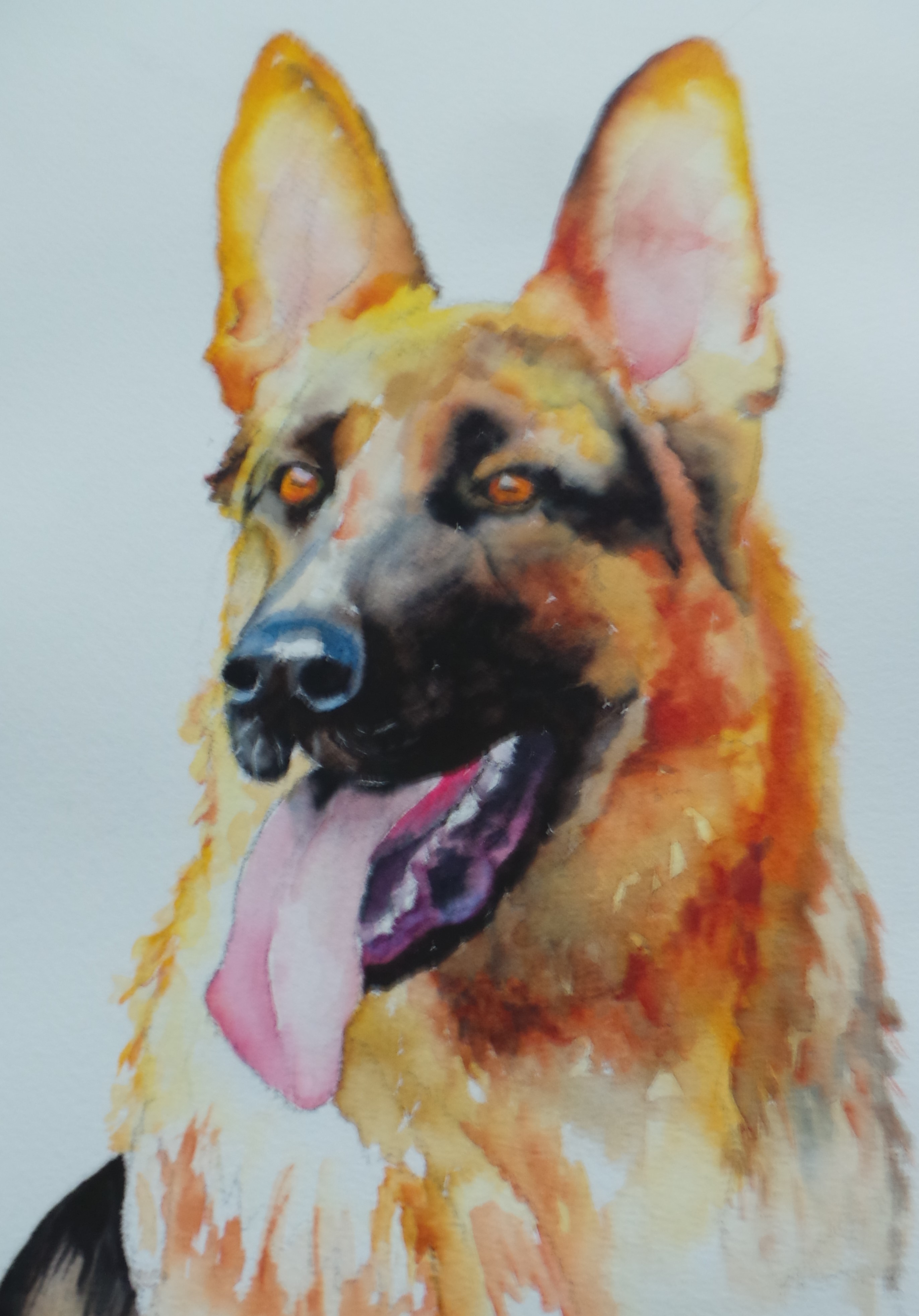 The regal german shepherd annette bennett watercolor art