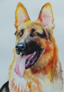 dog, german shepherd, watercolor, painting, pet, memorial