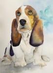 dog, white, terrier, basset, westie, dlamation