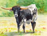 texxas longhorn bull black and white watercolor painting by annette bennett - 087