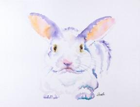 Bennett, Bunny, Purple