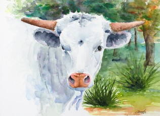 white longhorn bull calf original watercolor by annette bennett
