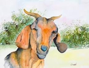 Bennett-GoatofManyColors